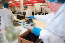 L'entreprise laonnoise vend aux grandes surfaces fraises, framboises, groseilles, myrtilles, etc.