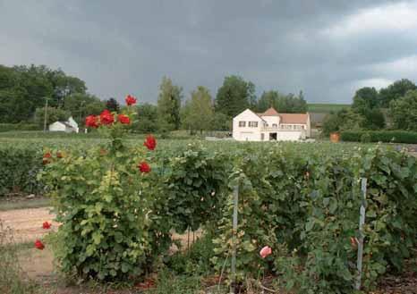 Le vignoble champenois dans l'Aisne est constitué de plus de 3 000 hectares en AOC.