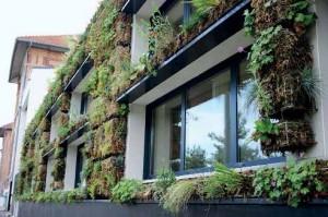 Ce mur végétalisé, le seul dans la ville picarde, apporte de la verdure au quartier.