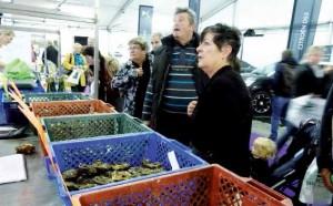 Entre la dégustation d'huîtres et une séance de maquillage, les promeneurs ont découvert un éventail d'exposants qui présentaient leur savoir-faire.