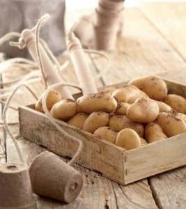 Les cinq agriculteurs ont également créé l'association Sauvons la Pompadour 2010.