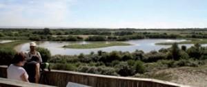 Le parc du Marquenterre est situé dans la réserve naturelle de la baie de Somme.