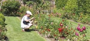 La roseraie compte 510 variétés de roses anciennes et récentes.