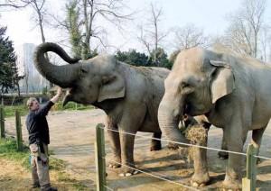 Bernard Doré : « Pour approcher les éléphants, nous sommes toujours deux soigneurs, car il ne faut jamais oublier qu'ils sont des animaux sauvages. »