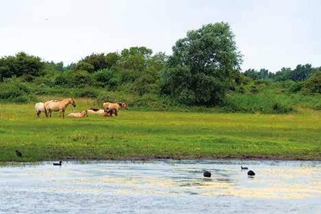 La baie de Somme, classée Grand Site depuis 2011 est sans doute le territoire idéal pour promouvoir l'écotourisme sur le territoire.