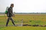 Grâce au programmepilote de Bonduelle : l'Indice de fréquence de traitement (IFT) des fermes volontaires a été réduit de 17% en 2013.