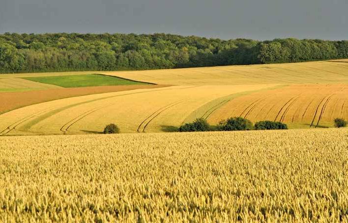 Les sols picards s'appauvrissent au fil du temps à cause de l'agriculture intensive.
